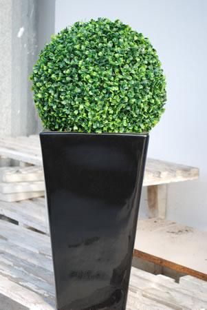 Piante da esterno rainone fiori e piante for Fiori da esterno