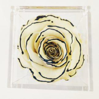 Rosa Cube White Edged cm 8x8