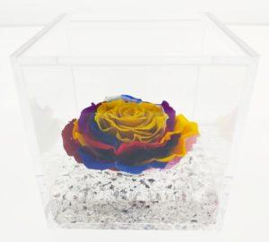 Rosa Cube Limited Edition Solar Rainbow
