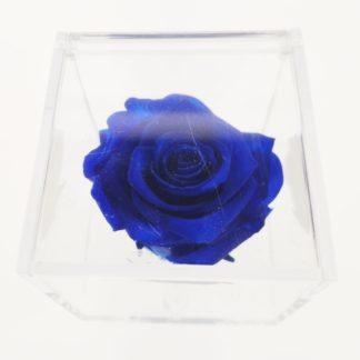 Rosa Cube 8x8 Blue