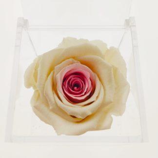 Rosa Cube Pink Gradient 8x8