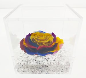 Rosa Cube Limited Edition Solar Rainbow